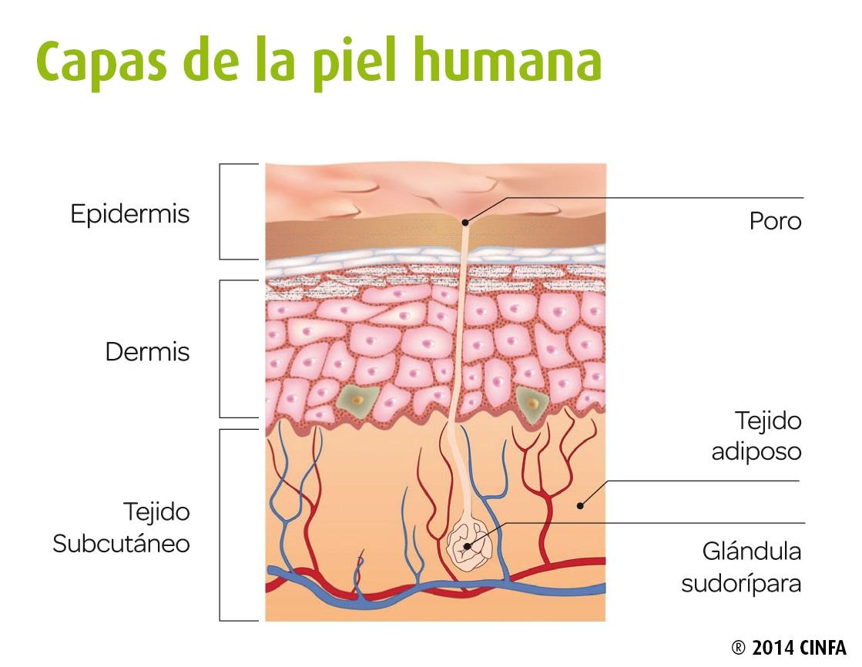 Cuidados de la piel diarios - CinfaSalud