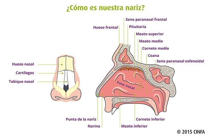 Enfermedades relacionadas con la nariz